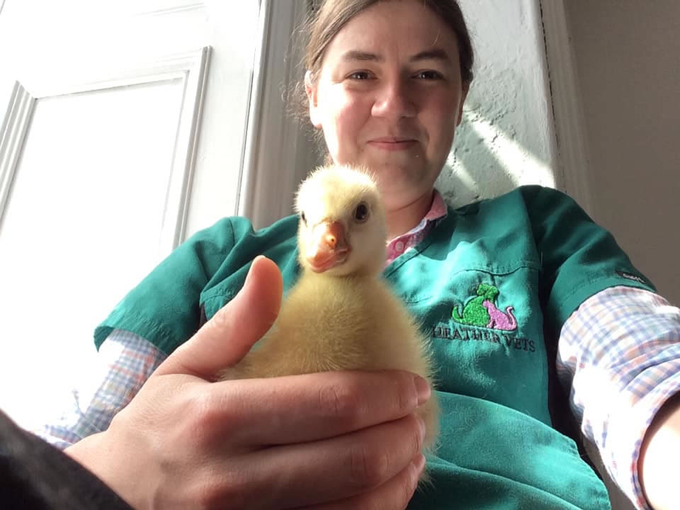 heather and duckling